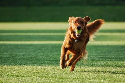silbato canino + envió a todo el país