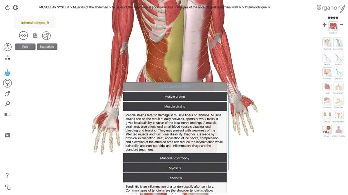 Software Atlas Anatomia Humana 3d Organon Anatomy - $ 300,00 en ...
