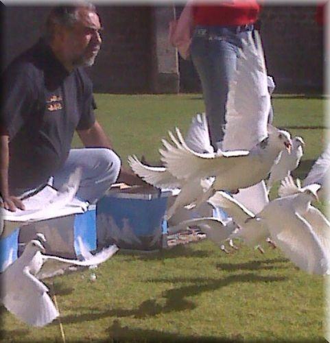 suelta de palomas blancas en eventos.