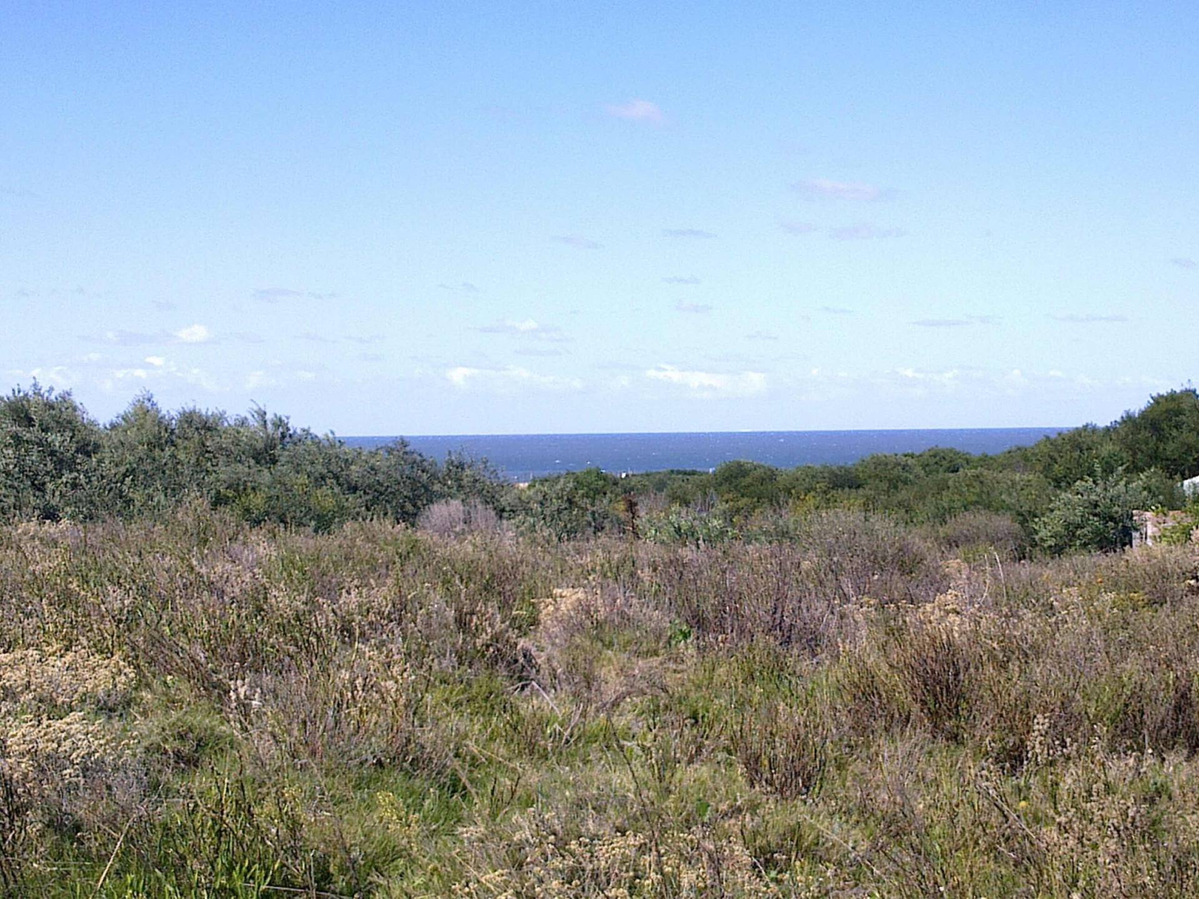 superficie 3 hectáreas en punta rubia / pegado a la pedrera