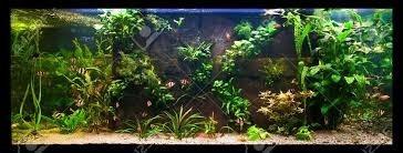 sustrato nutritivo para acuarios alimento para plantas