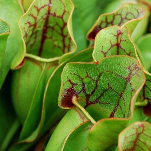 sustrato plantas carnívoras 5litros