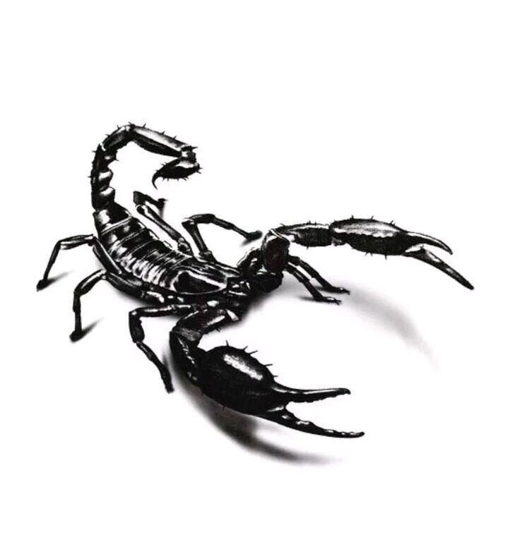 Escorpion Tatuaje tatuaje temporal escorpión 13x10 - $ 420,00 en mercado libre