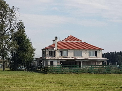 teja portuguesa naturalli barraca central