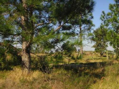 terreno de 10.150 m2 en riachuelo a 200 mts. ruta