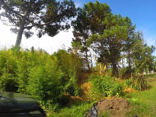terreno - pinares
