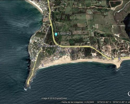 terreno sobre ruta interbalnearia en punta ballena - ref: 5534