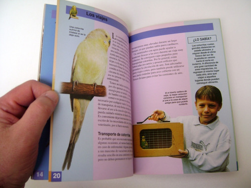 todo sobre cotorritas australianas viner ave pajaro boedo