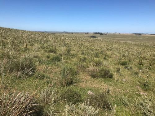 treinta y tres- tupambae 64 has campo forestal - ganadero