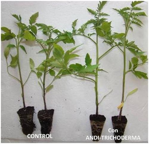 trichodermas. estimulador radicular y control fitosanitario.
