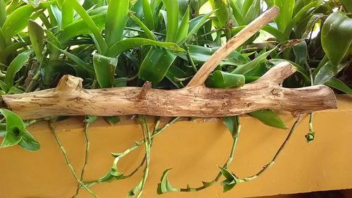 tronco para acuario o terrario