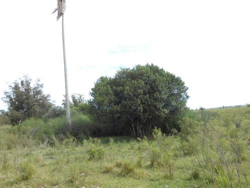 vende 30 has con 20 has forestada con eucaliptus para cortar