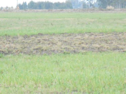 vende 4 has tierra totalmente orgánica, tajamar a 500 m r 33