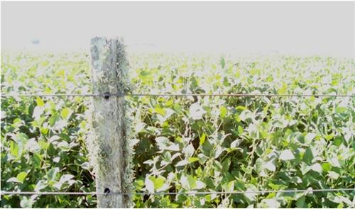 vendo campo agrícola en flores