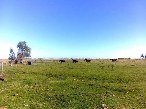 vendo excelente campo agrícola/ganadero con casco completo