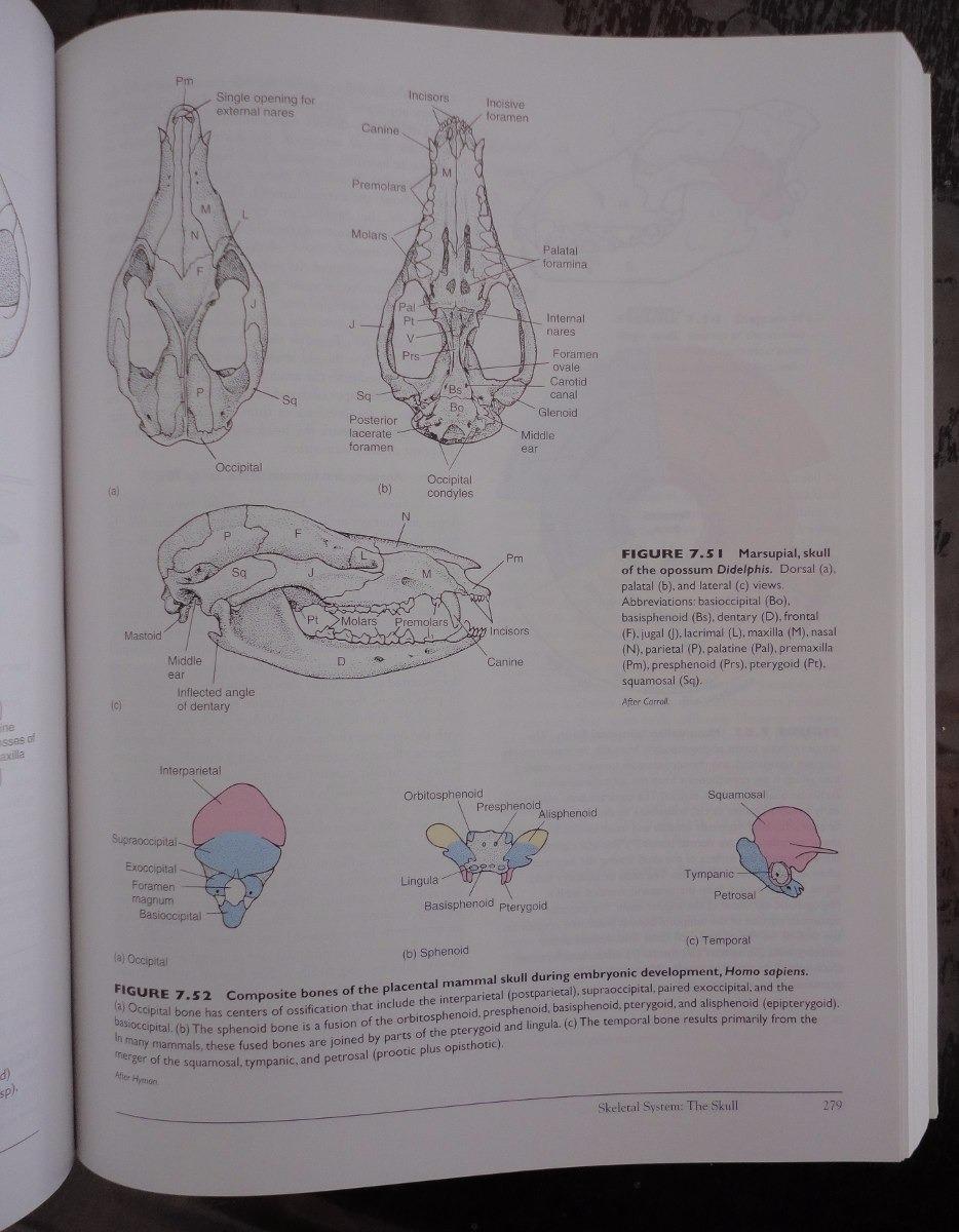 Vertebrates Kardong Comparative Anatomy Libro Inglés 6th Ed ...