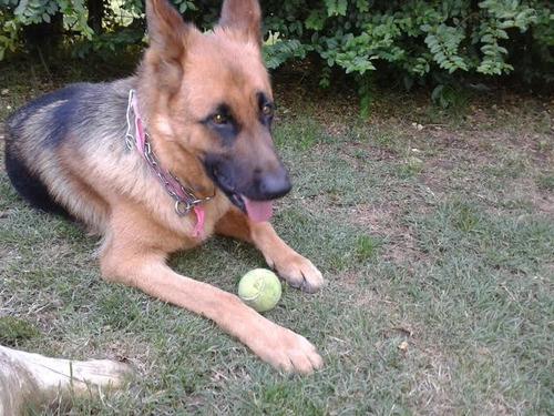 veterinario a domicilio 094104176