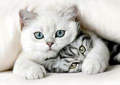 wits gato 25 kg+ regalo + envio gratis